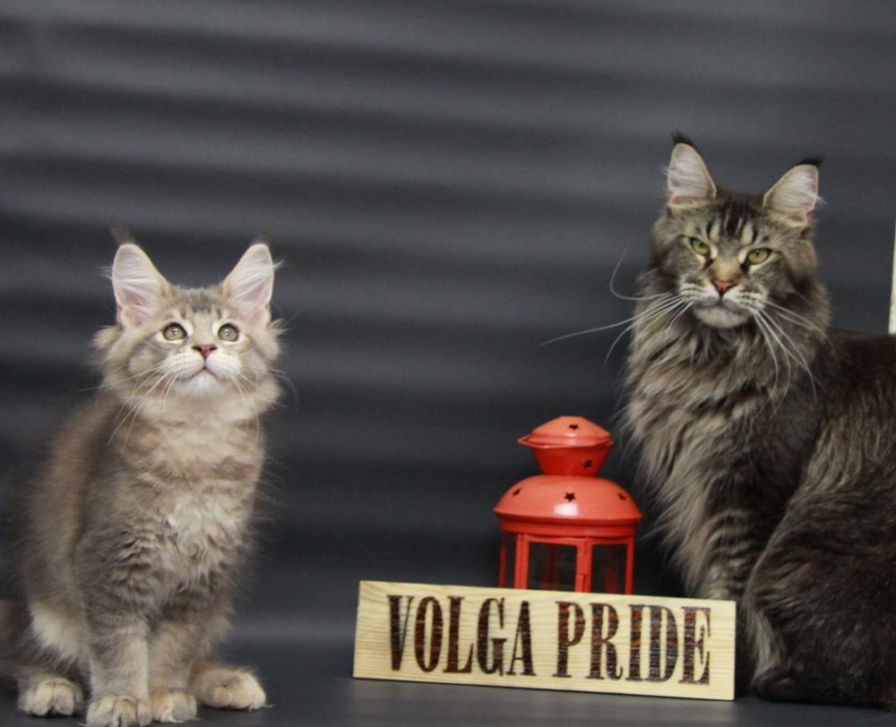 Chloe Volga Pride