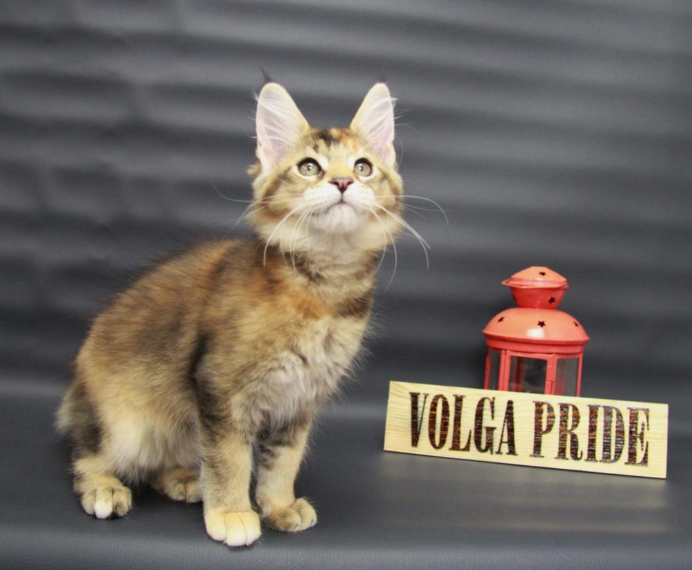 Christie Volga Pride