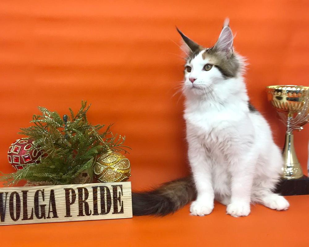 Fifa Volga Pride