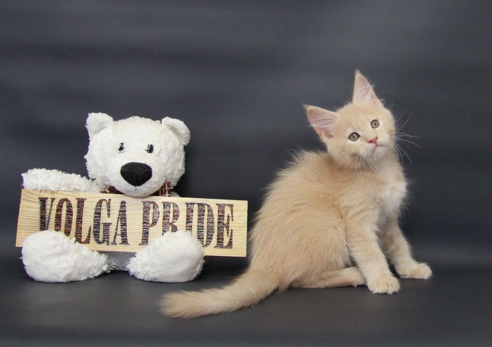 KIRA Volga Pride