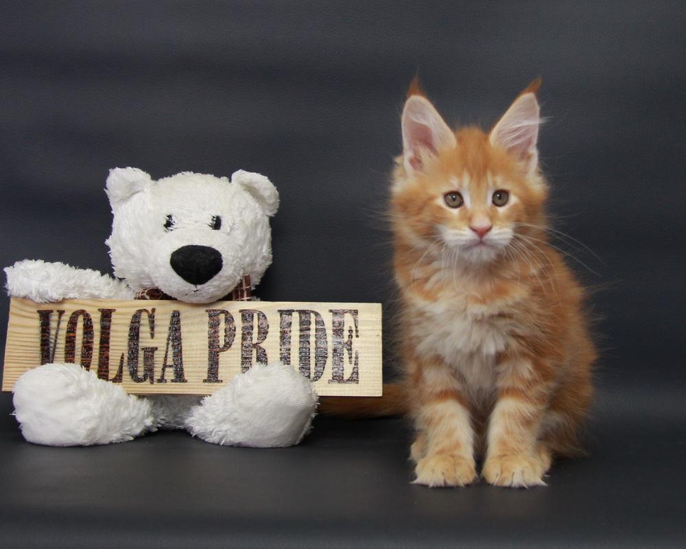 KlipSA Volga Pride