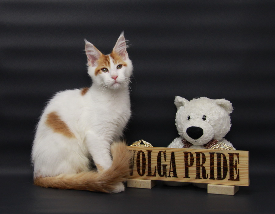 Nambik Volga Pride