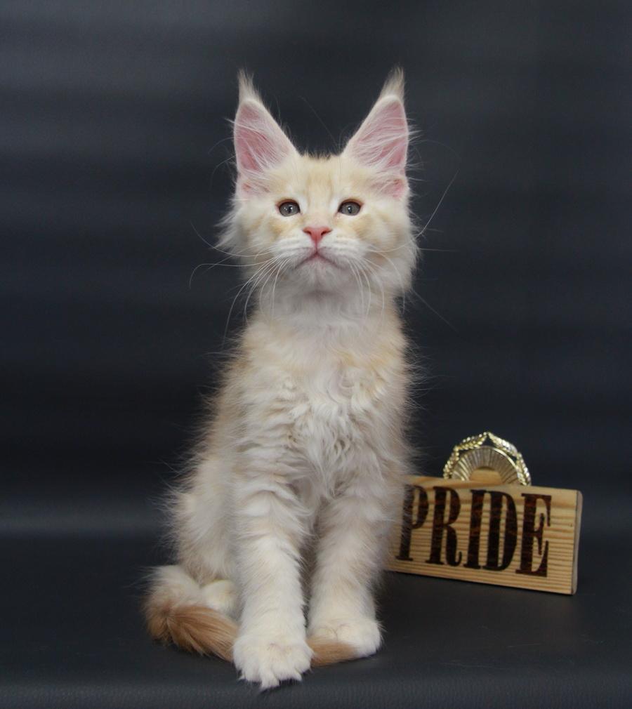 Onyx Volga Pride