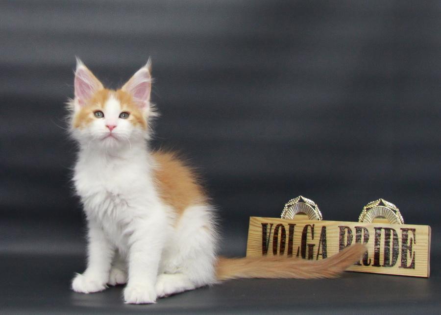 Oriona Volga Pride