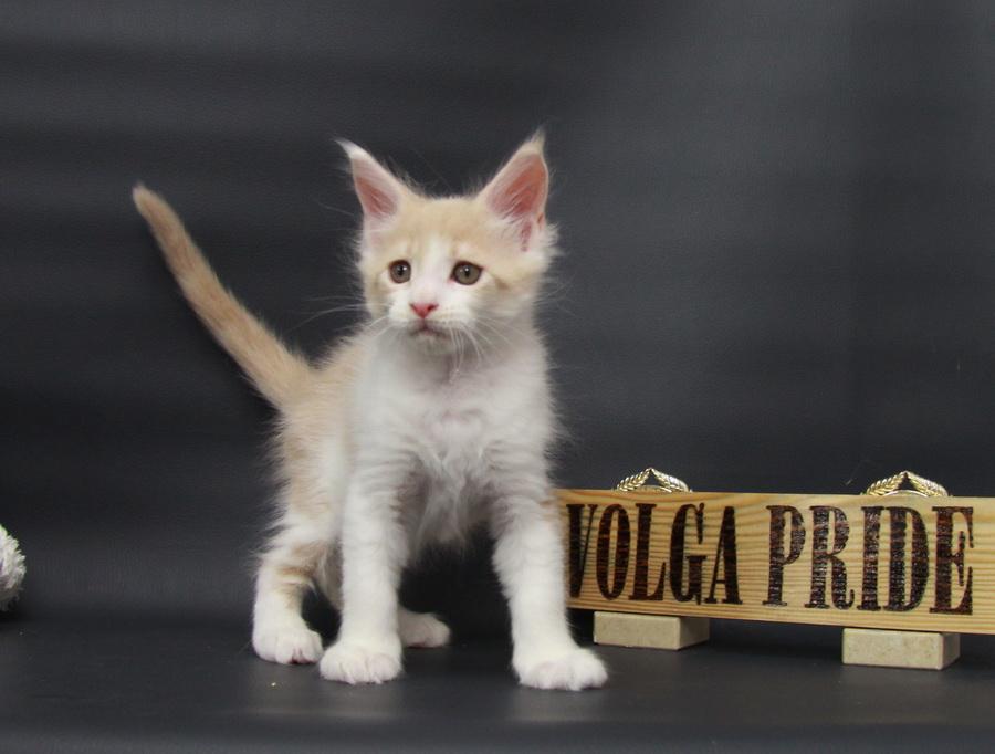 Persik Volga Pride