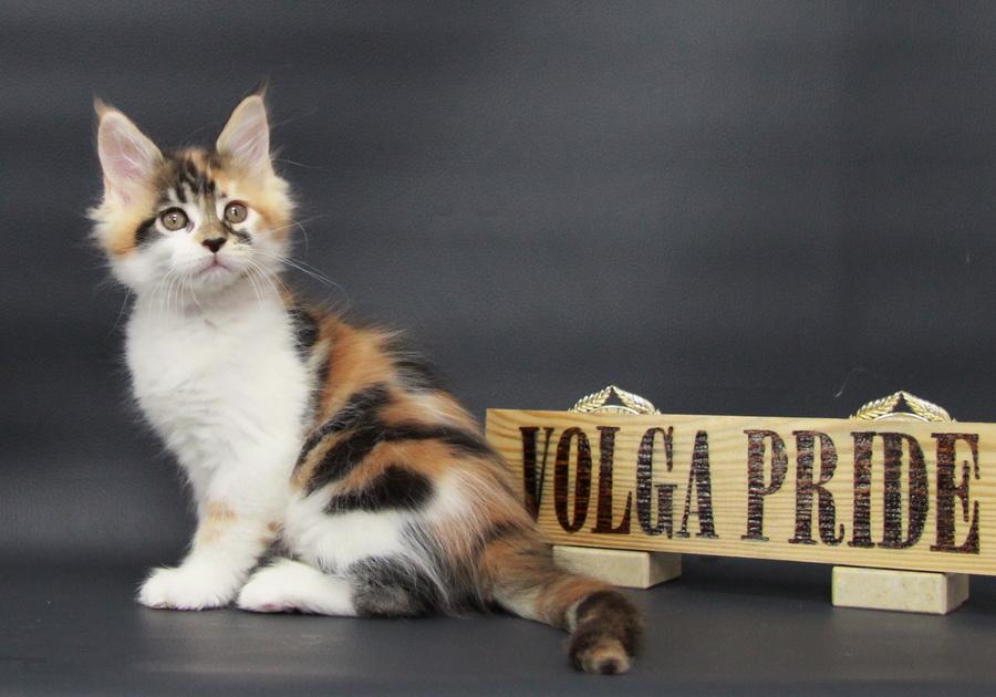 Pudra Volga Pride
