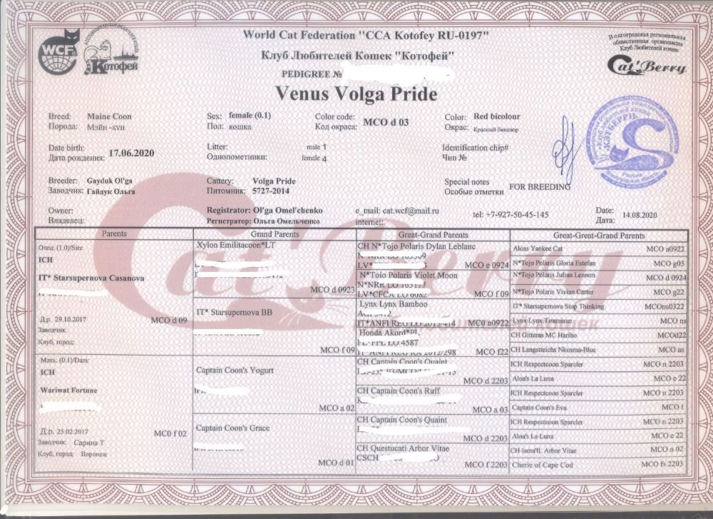 Venus Volga Pride